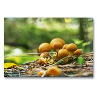 Premium Textil-Leinwand 90 x 60 cm Quer-Format Pilze in unseren Wäldern | Wandbild, HD-Bild auf Keilrahmen, Fertigbild auf hochwertigem Vlies, Leinwanddruck von Avianaarts Design Fotografie by Tanja Riedel