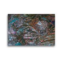 Premium Textil-Leinwand 45 x 30 cm Quer-Format Wiener Buche | Wandbild, HD-Bild auf Keilrahmen, Fertigbild auf hochwertigem Vlies, Leinwanddruck von Andreas Struve