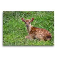 Premium Textil-Leinwand 75 x 50 cm Quer-Format Bambis Welt | Wandbild, HD-Bild auf Keilrahmen, Fertigbild auf hochwertigem Vlies, Leinwanddruck von Heike Hultsch