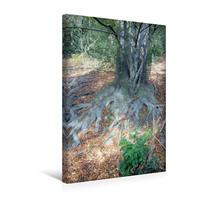 Premium Textil-Leinwand 30 x 45 cm Hoch-Format Der Zauberwald   Wandbild, HD-Bild auf Keilrahmen, Fertigbild auf hochwertigem Vlies, Leinwanddruck von Uwe Bernds