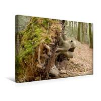 Premium Textil-Leinwand 45 x 30 cm Quer-Format Der Zauberwald   Wandbild, HD-Bild auf Keilrahmen, Fertigbild auf hochwertigem Vlies, Leinwanddruck von Uwe Bernds