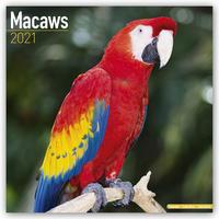 Macaws - Ara-Papageien - Aras 2021