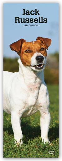 Jack Russels - Jack Russel Terrier 2021