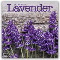 Lavender - Lavendel 2021