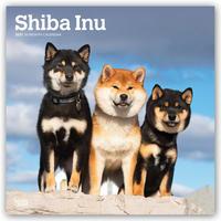 Shiba Inu 2021 - 16-Monatskalender mit freier DogDays-App