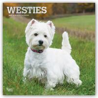 West Highland White Terriers - Westies 2021 - 16-Monatskalender mit freier DogDays-App