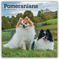 Pomeranians - Zwergspitze 2021 - 16-Monatskalender mit freier DogDays-App