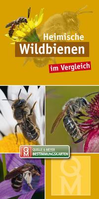 Heimische Wildbienen