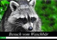 Besuch vom Waschbär (Wandkalender 2020 DIN A3 quer)
