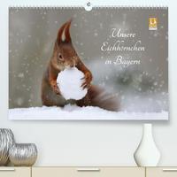 Unsere Eichhörnchen in Bayern (Premium, hochwertiger DIN A2 Wandkalender 2020, Kunstdruck in Hochglanz)