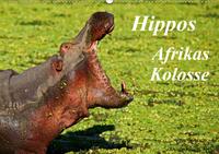 Hippos - Afrikas Kolosse (Wandkalender 2021 DIN A2 quer)