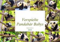 Pandabär Babys (Wandkalender 2021 DIN A2 quer)