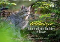 Wildkatzen - die anmutigsten Raubiere in Europa. (Wandkalender 2021 DIN A2 quer)