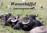 Wasserbüffel - Geburtstagskalender (Wandkalender 2021 DIN A4 quer)