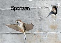 Spatzen (Wandkalender 2021 DIN A3 quer)