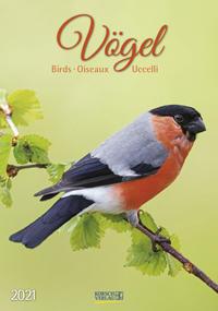 Vögel, Birds, Oiseaux, Uccelli 2021