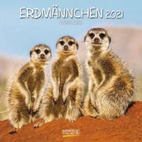 Erdmännchen, Meerkats 2021