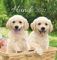 Hunde 2021