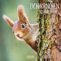 Eichhörnchen, Squirrels 2021