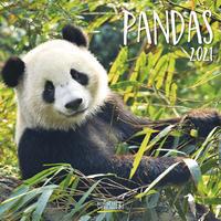 Pandas 2021