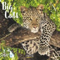 Big Cats 2021
