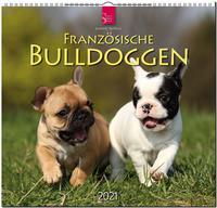 Französische Bulldoggen 2021