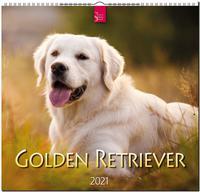 Golden Retriever 2021