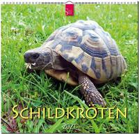 Schildkröten 2021