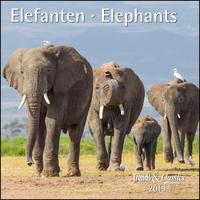 Elefanten Elephants 2019 - Broschürenkalender - Wandkalender - mit herausnehmbarem Poster - Format 30 x 30 cm