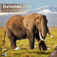 Elefanten Kalender 2021