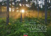Die Pracht des Waldes - Kalender 2019