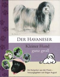 Der Havaneser Kleiner Hund ganz groß